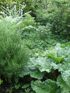 .Edible forest garden - hawthorn, blackthorn, pear, rhubarb, currants, globe artichokes, strawberries, rosemary