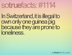 In Switzerland, it is illegal to own only one guinea pig because they are prone to loneliness.