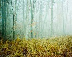 Fog . landscape photography . dreamy decor . by joystclaire
