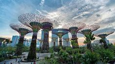 cingapura guia gardens by the bay