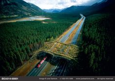 """Safe passage for animals.  """"This wildlife overpass near Banff National Park, combined with fencing that leads animals to it, is designed to give wildlife a way to cross over the interstate. It is now thought that underpasses work better for skittish animals too shy to cross out in the open.""""  By Joel Sartore."""