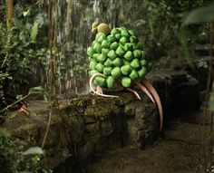 janaina tschape. melantropics - veratrum bulbosus.  cibachrome 2006