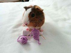 Dieser kleine Mann, der einen Schal für seinen besten Freund strickt.