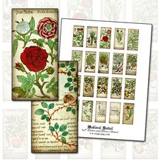 Medieval Herbal 1x2 domino digital collage sheet 25mm by magicpug