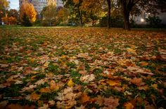 В городе Дубна наступила осень.(4)