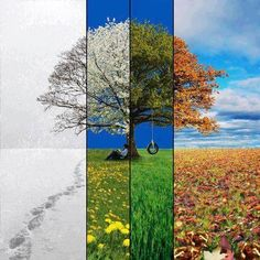Four Seasons: I have a vague idea of doing something like this in my living room with a series of photos. Seasons Of The Year, Four Seasons, Change Of Seasons, Season Change, Image Clipart, Time Photography, Landscape Photography, Different Seasons, Wow Art