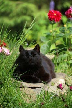 Content black cat