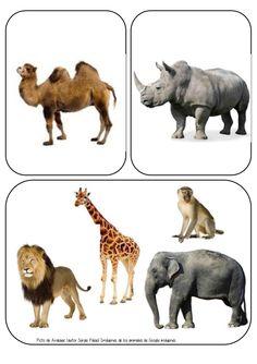 Animales de la Selva Farm Animals For Kids, Animal Pictures For Kids, Wild Animals Pictures, Jungle Animals, Animal Coverings, Wild Animals List, Flashcards For Kids, Animal Cards, Pet Birds