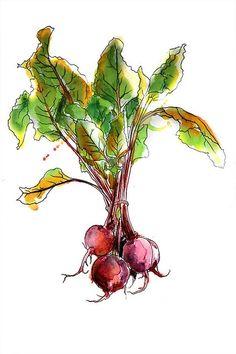 Watercolor Fruit, Watercolor Sketch, Watercolor And Ink, Watercolor Illustration, Watercolor Flowers, Watercolor Paintings, Watercolors, Vegetable Painting, Vegetable Drawing