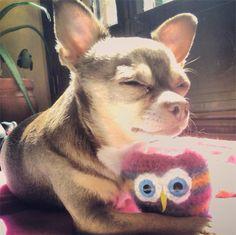 Lupe & amigurumi owl #6