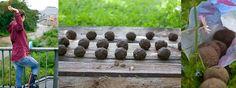 Hier zeigt euch das Garten Fräulein, wie ihr eure eigenen Seedbombs herstellt. Klickt euch rein und lasst die Seedbombs fliegen!