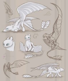 Character design and concept art illustration. Httyd Dragons, Cute Dragons, How To Draw Dragons, How To Train Dragon, How To Train Your, Dragon Sketch, Dragon Drawings, Dragon Art, Fantasy Creatures