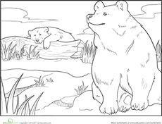 Color the Brown Bears Worksheet