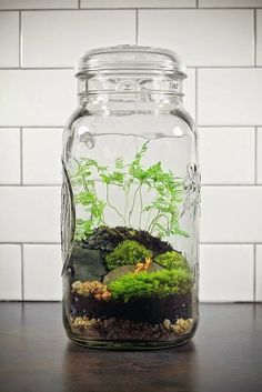 Terrariums are a fun winter project  to create and then enjoy all year long.   Home Design Ideas