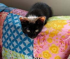 This is Merlin, Doc Witchy's black kitten, on quilt. A house without either is not a home.