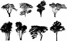 more trees silhouette vector