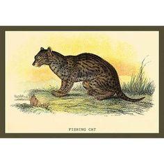 Buyenlarge 'Fishing Cat' by Sir William Jardine Painting Print