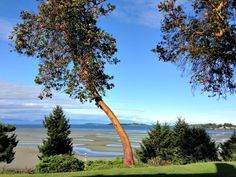 Small Vancouver Island towns Parksville and Qualicum Beach boast beautiful trees, beaches, caving, ocean kayaking, and quirky shops with goats on the roof. Lanai Island, Island Beach, Beach Photography Friends, Best Island Vacation, Italy Vacation, Cheap Beach Vacations, Honey Moon, Where Is Bora Bora, Fiji Travel