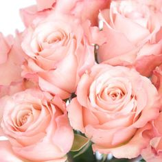 A Rose Full of Romance is a delicate pink that softly opens to a full bloom. This fresh rose has warm undertones that would look wonderful at a baby shower, birthday party or trendy spring wedding. Indicative of elegance and joy, stems of these roses will look stunning arranged in bunches on...