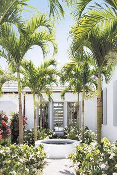 Modern White Courtyard with Tall Palm Trees