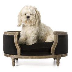panier chien #dog #cute                                                                                                                                                                                 More
