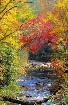 ***Pisgah National Forest (North Carolina) [unable to determine photographer] E