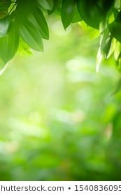 Closeup Nature View Of Green Leaf On Blurred Greenery Background In Garden With Copy Space Using As Background Nat In 2020 Greenery Background Nature View Green Leaves