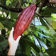 #Cacao #Molyvade #Viaje #BALI http://molyvade.blogspot.com/2017/01/bali.html