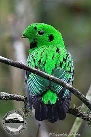 Image result for rare birds