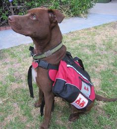 Prepare your pet for disaster with a stylish emergency pack (Alex Close)
