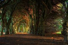 Ancient Forest, Meath, Ireland