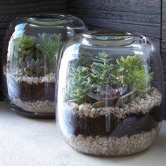 Cute Succulent Terrariums!
