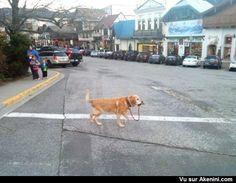 Un chien qui n'a besoin de personne ! - Independent dog don't need no man