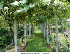 Grape Trellis - I want this exactly. Then, sun loving veggies and plants grow on one side and clematis and wisteria on the other.