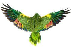 Andrew Zuckerman Bird book
