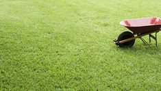 Organic lawns have the ability to fight off pests and weeds on their own, leaving room for healthy, strong grass.