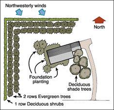 Old windbreak design a single row of trees or shrubs for Garden windbreak designs
