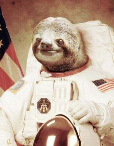 Sloths in space...
