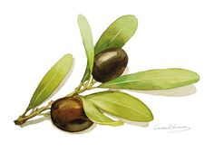 Olives Painting - Watercolor Olives - 5 by 7 print - Watercolor Painting…