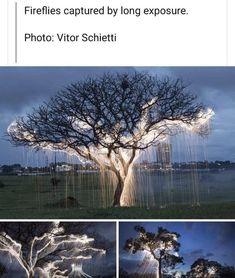 Amazing Nature, Amazing Art, Creative Photography, Nature Photography, Amazing Photography, Pretty Pictures, Cool Photos, Beautiful World, Beautiful Places