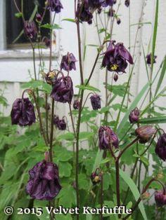 7 Days of Blue/Purple Flowers