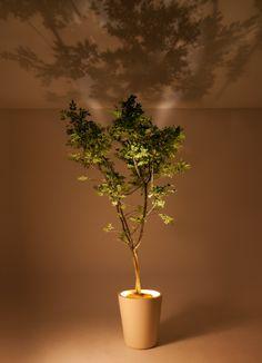 Beautiful shadow projection pot 'Forestarium' Lamp by PIANTA×STANZA