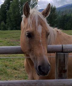 Friend from Triple Creek Ranch