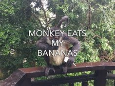 ★☆★ Monkey Enters Room and eat my Bananas! ★☆★ I was at the Sandos Caracol Eco-Resort & Spa in Playa del Carmen while I was in my room resting after a long d...