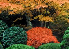 "Article. ""Revealing the 'Essence of the Tree': Aesthetic Pruning of Japanese Maples"""