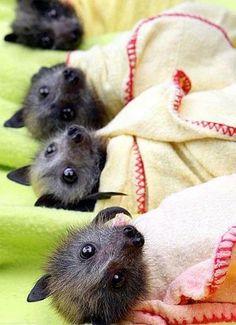 yes... baby bats are cute.