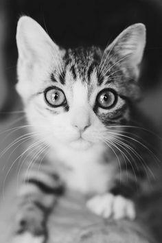 http://pinterest.com/nfordzho/lovely-animals/