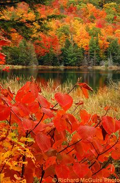 colorful autumn .. X ღɱɧღ ||
