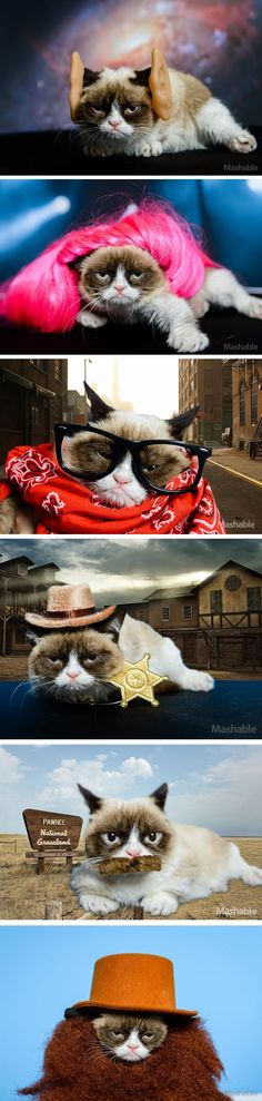 Grumpy Cat plays dress up  ╔═╦╗╔╦╗╔═╦═╦╦╦╦╗╔═╗  ║╚╣║║║╚╣╚╣╔╣╔╣║╚╣═╣  ╠╗║╚╝║║╠╗║╚╣║║║║║═╣  ╚═╩══╩═╩═╩═╩╝╚╩═╩═╝