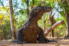 Komodo National Park, National Parks, Environmental Law, Komodo Island, Komodo Dragon, Sustainable Tourism, Wildlife Park, Animal Protection, Environmentalist